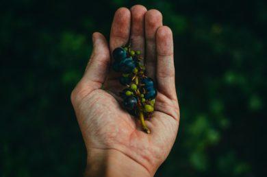 Leuke druiven weetjes